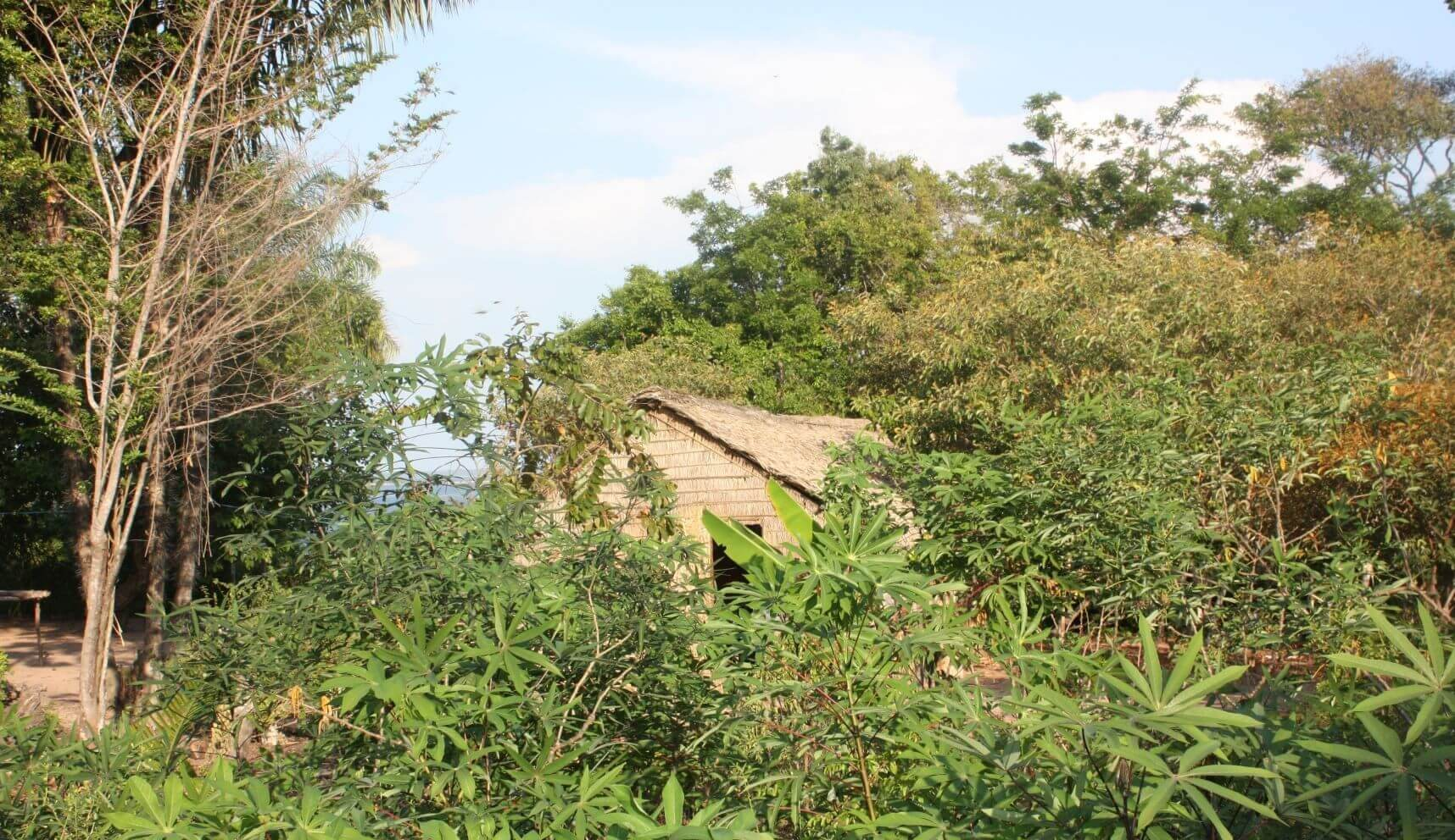 Analyzing word frequencies: Manioc plants surrounding a house