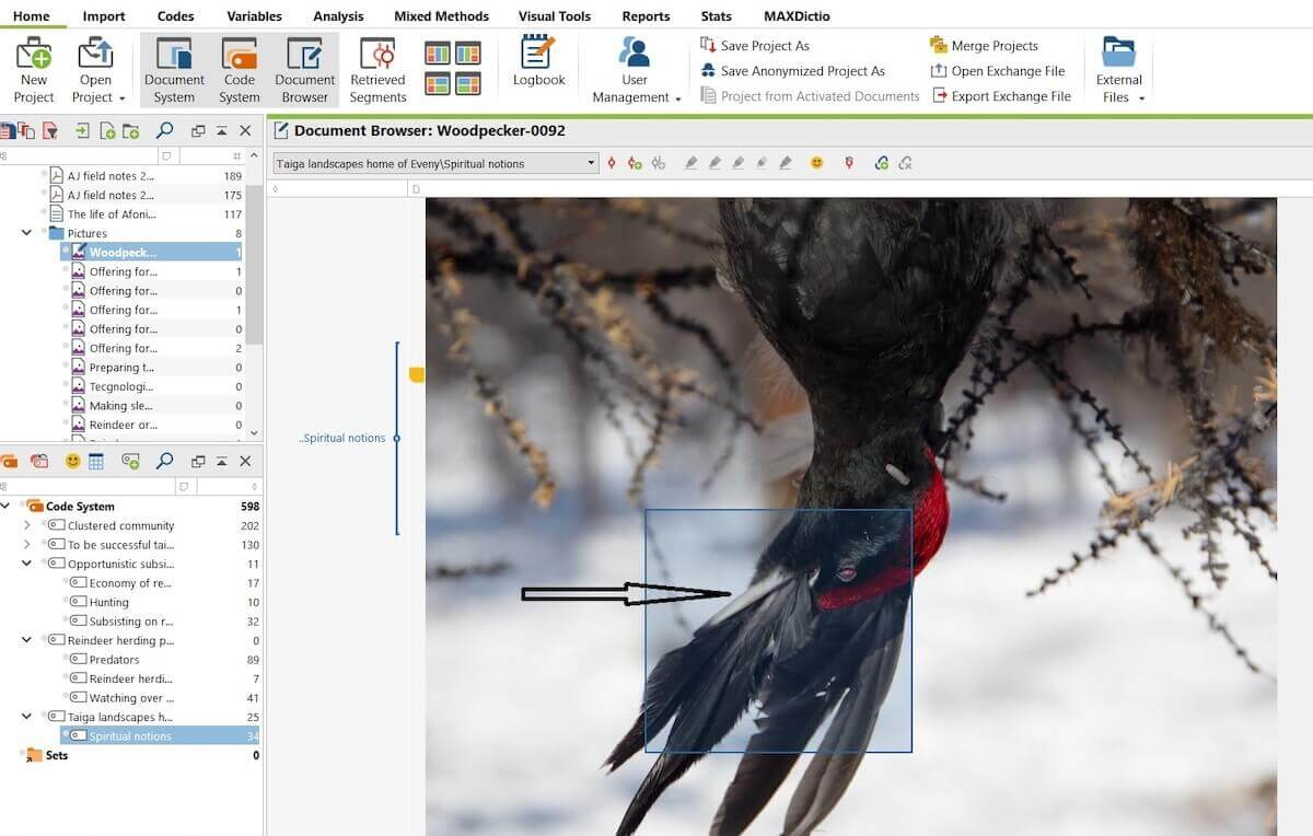 While I was coding pictures with Maxqda, I zoomed it and to my surprise I noticed that woodpecker's feathers was putted in its spout.