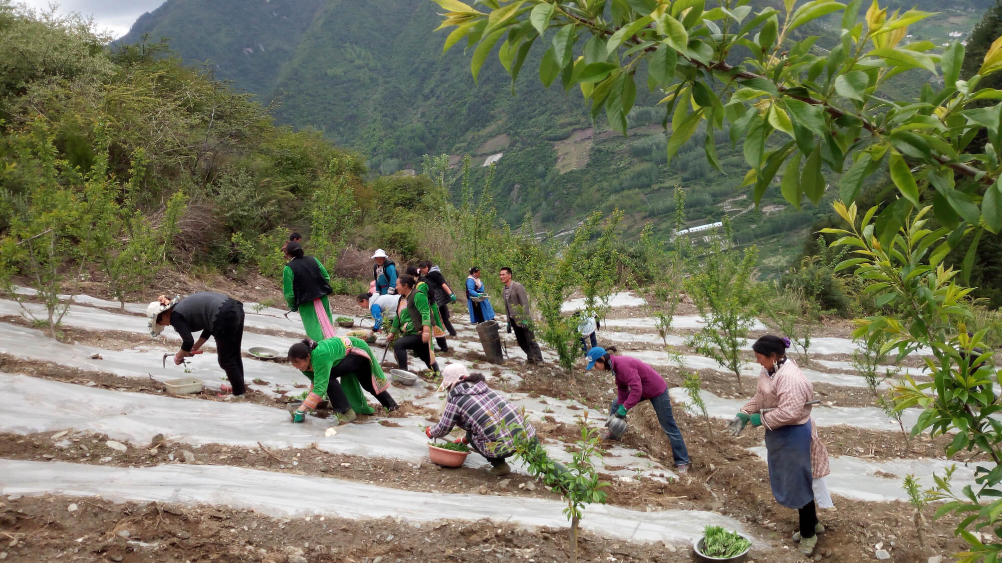 Workers in the fields of rural China