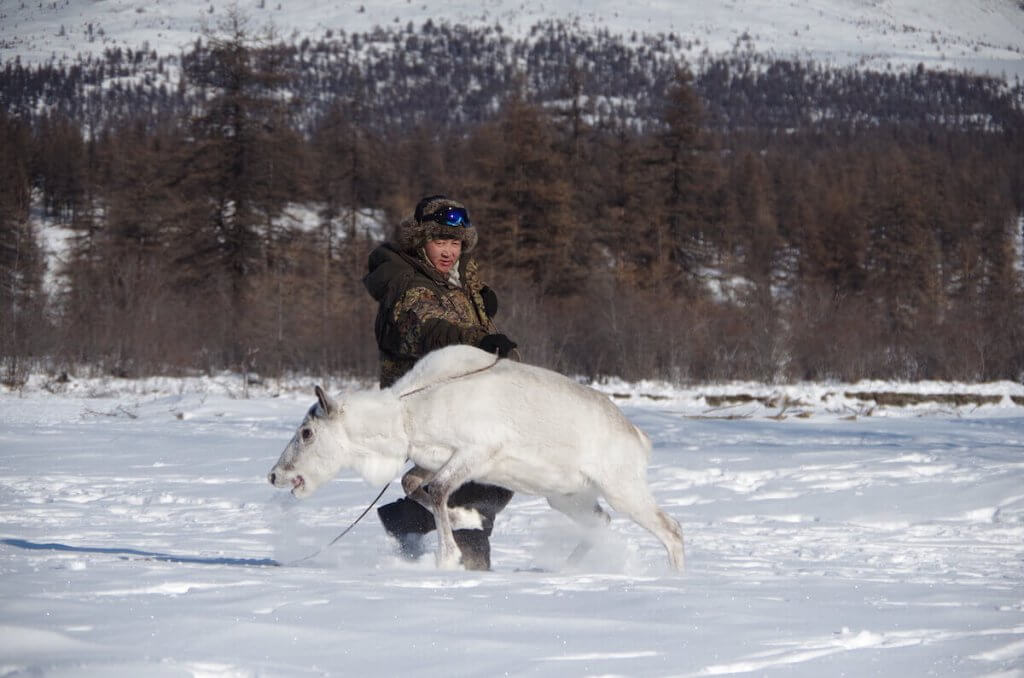 Afonia's daily duty in taiga, to find and bring reindeers to the encampment