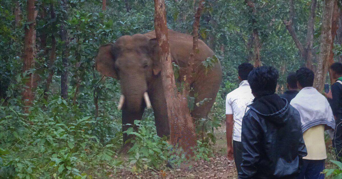 People tracking elephant movement